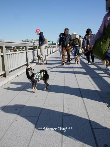 第26回マザーウルフ遠足 江ノ島レポート_e0191026_18300412.jpg