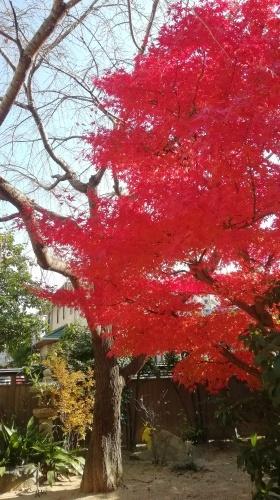 紅葉がきれいです。_b0020130_13102960.jpg