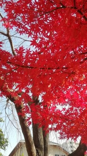 紅葉がきれいです。_b0020130_14040750.jpg