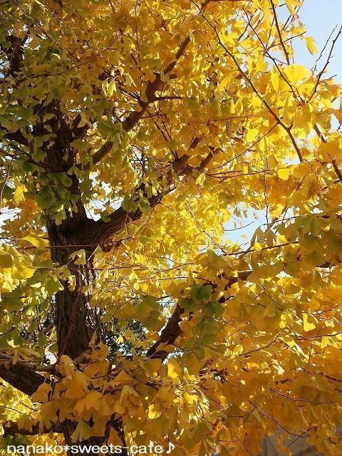 黄色の絨毯_d0147030_21042534.jpg