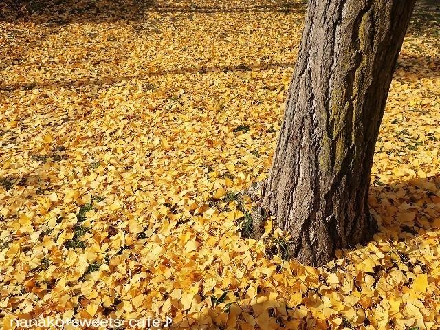 黄色の絨毯_d0147030_21050414.jpg