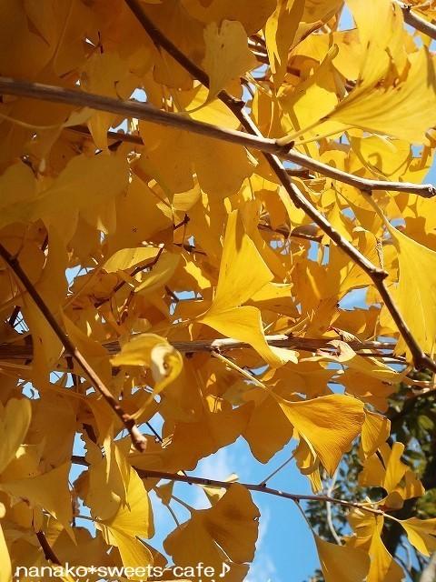 黄色の絨毯_d0147030_21051121.jpg