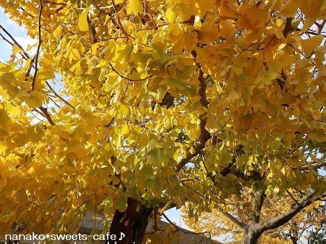 黄色の絨毯_d0147030_21060250.jpg