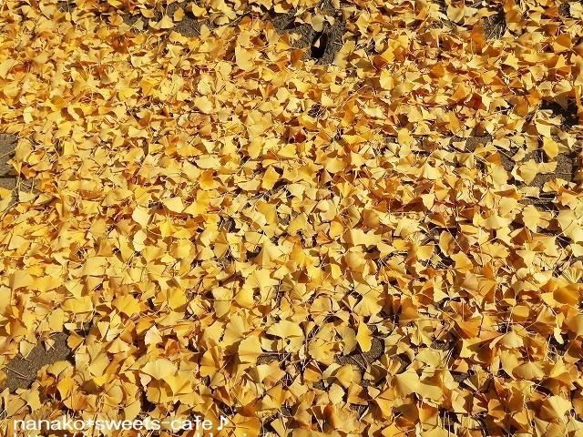 黄色の絨毯_d0147030_21060651.jpg