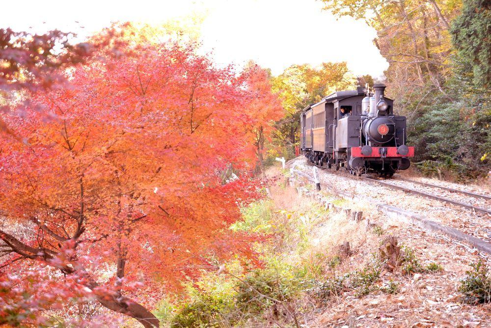 沿線の紅葉と9号機関車_e0373930_22224651.jpg