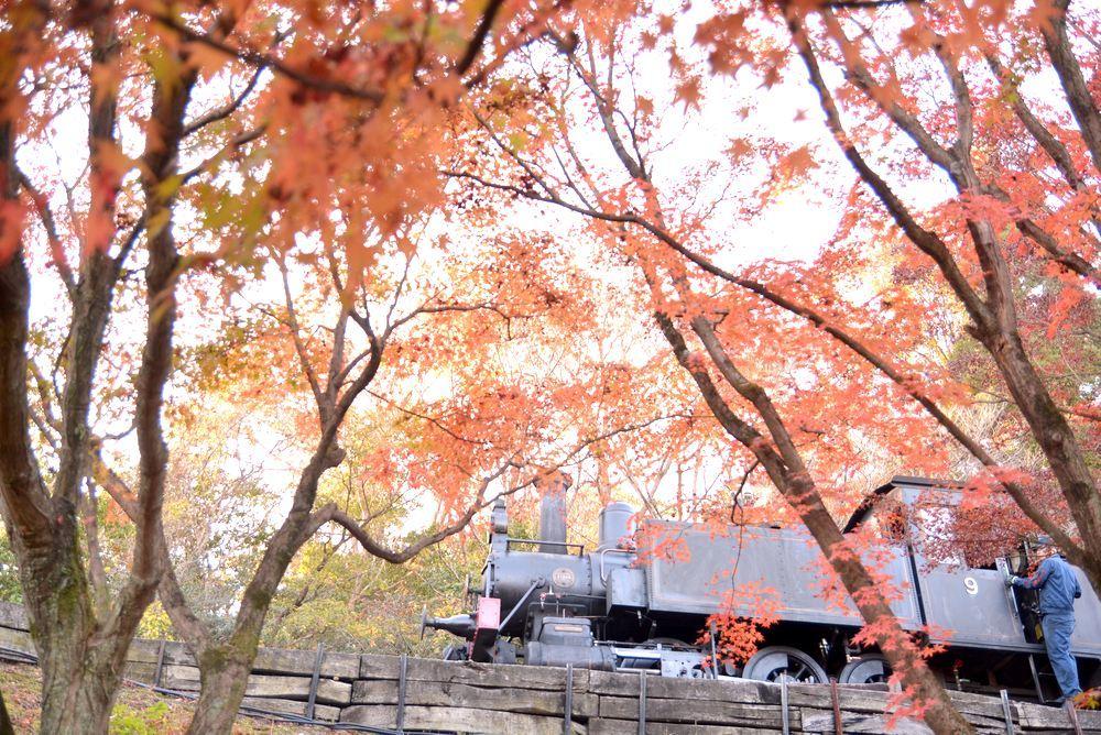 沿線の紅葉と9号機関車_e0373930_22224773.jpg