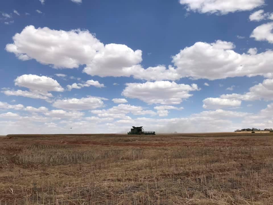 オーストラリア農家_d0166534_17291478.jpg
