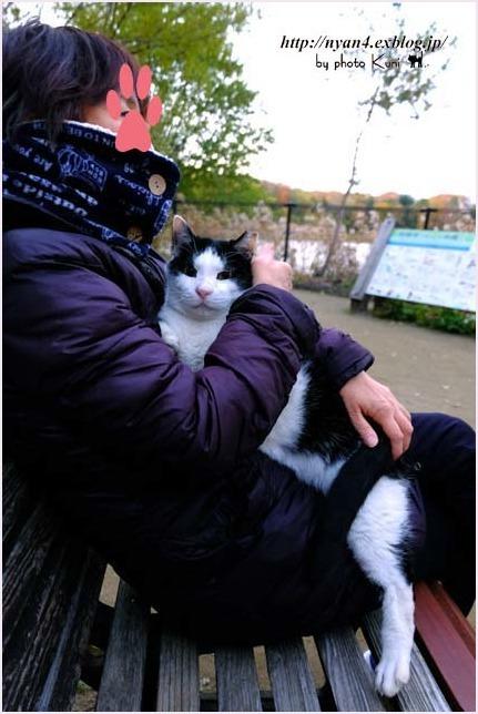 抱っこが出来る外猫さん_f0166234_22552196.jpg