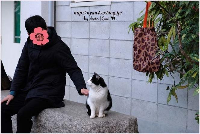 抱っこが出来る外猫さん_f0166234_22553972.jpg