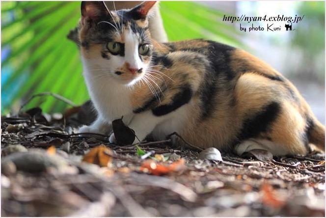 抱っこが出来る外猫さん_f0166234_23093179.jpg