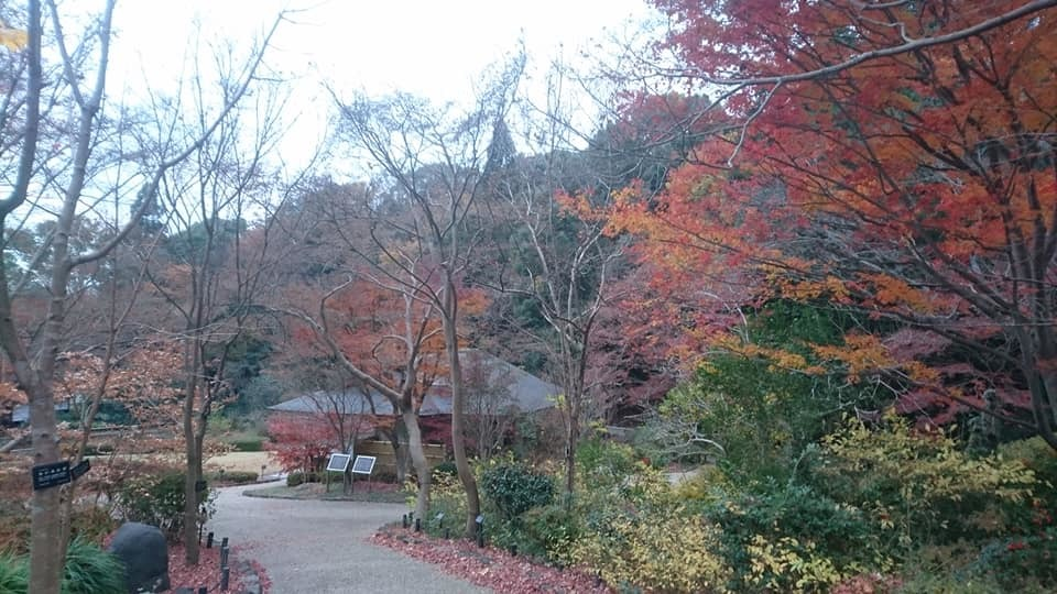 東山植物園へ♪_f0373339_14221723.jpg