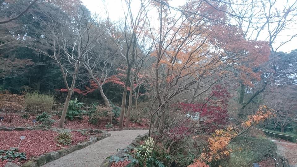東山植物園へ♪_f0373339_14221808.jpg