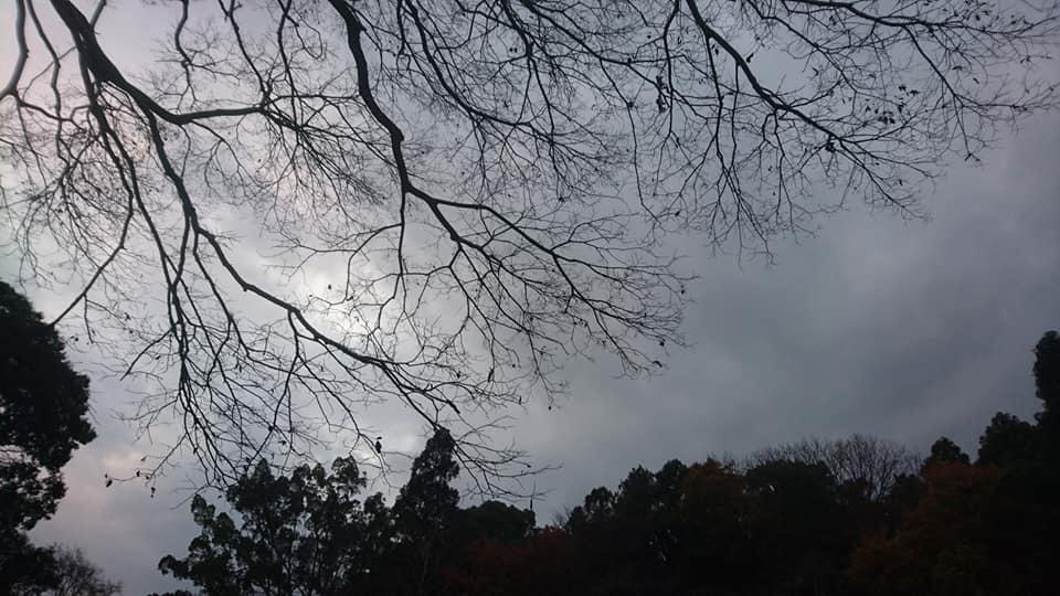 東山植物園へ♪_f0373339_14224743.jpg