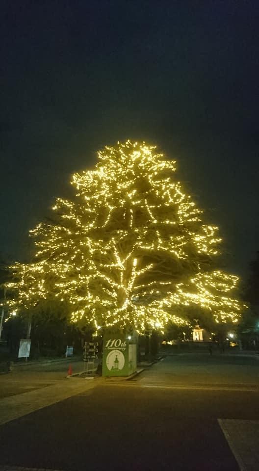 鶴舞公園スペシャルクリスマス2019_f0373339_14242566.jpg