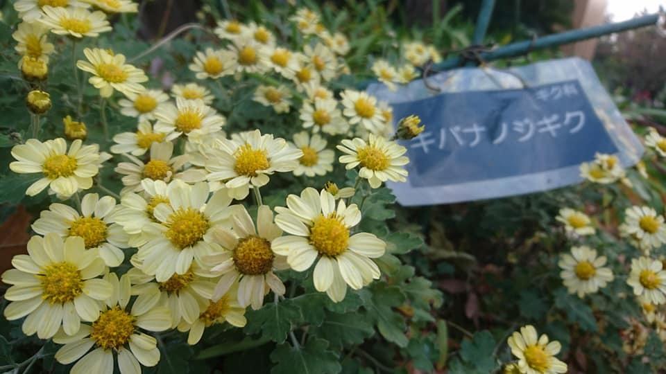 鶴舞公園スペシャルクリスマス2019_f0373339_14321953.jpg