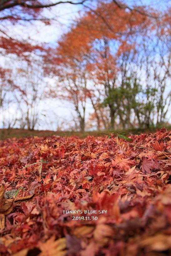 深まりゆく秋の日に、_c0145250_09073825.jpg