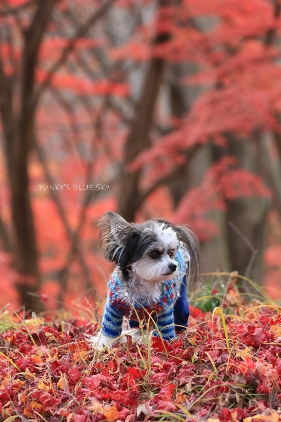 深まりゆく秋の日に、_c0145250_09074144.jpg