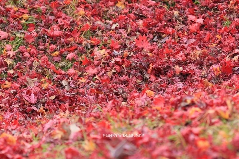深まりゆく秋の日に、_c0145250_09074497.jpg