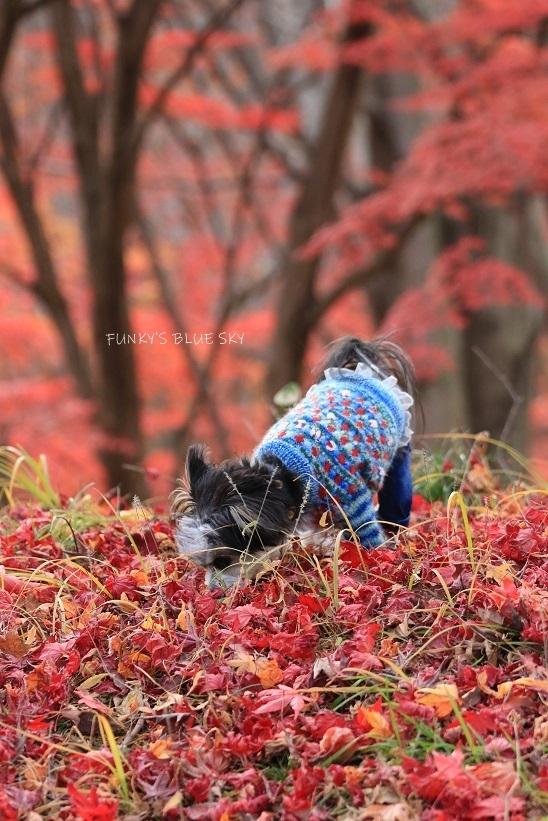 深まりゆく秋の日に、_c0145250_09074795.jpg