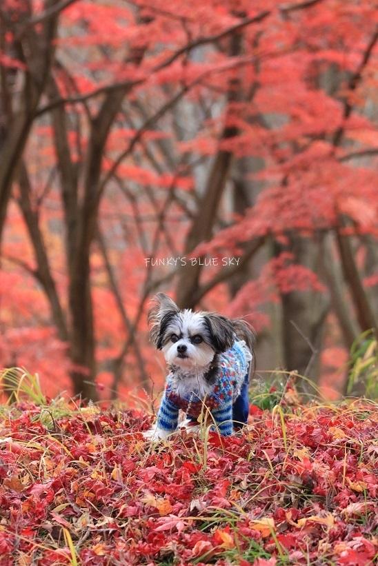 深まりゆく秋の日に、_c0145250_09075019.jpg
