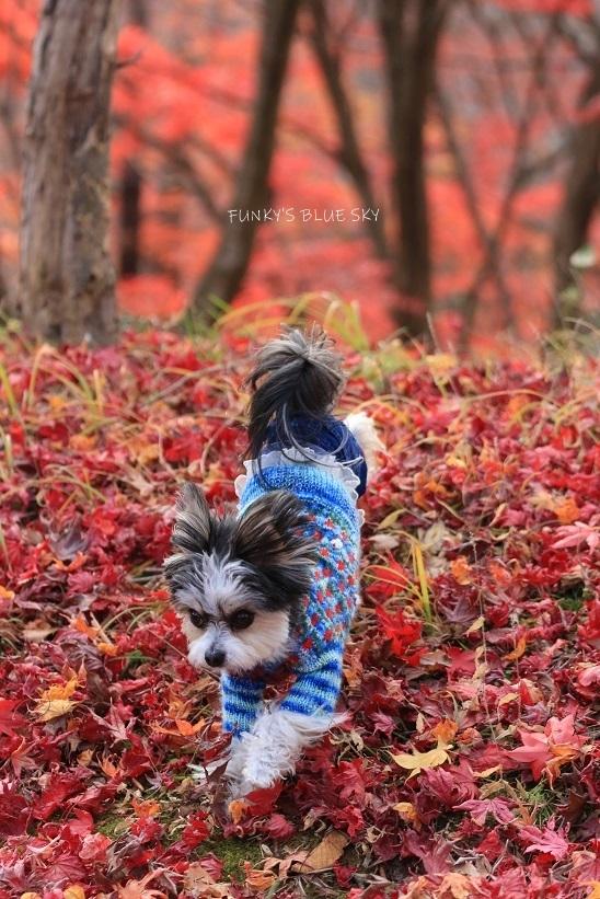 深まりゆく秋の日に、_c0145250_09075749.jpg