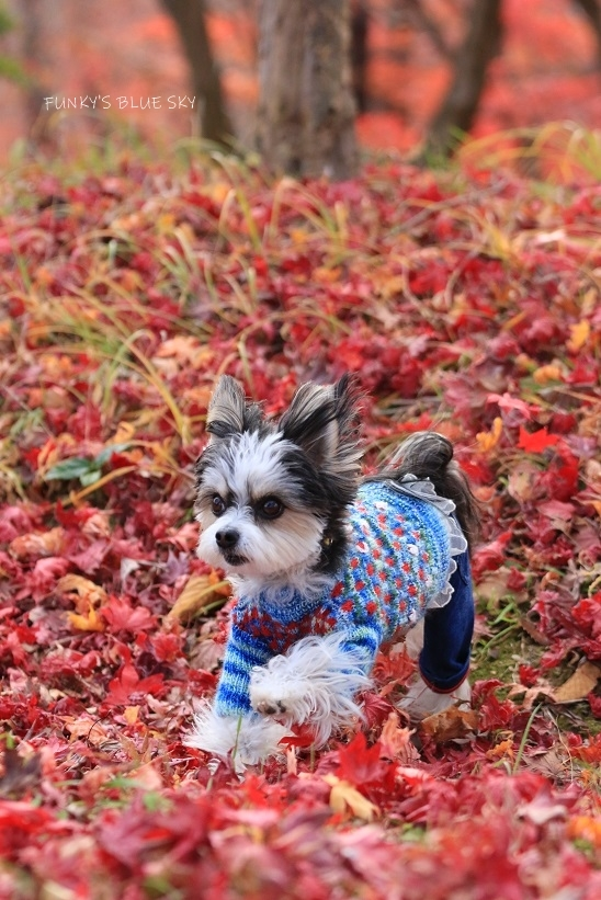 深まりゆく秋の日に、_c0145250_09080198.jpg
