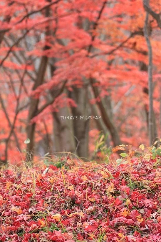 深まりゆく秋の日に、_c0145250_09080606.jpg