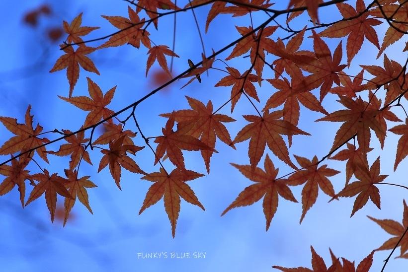 深まりゆく秋の日に、_c0145250_09081625.jpg