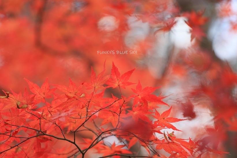 深まりゆく秋の日に、_c0145250_09081939.jpg
