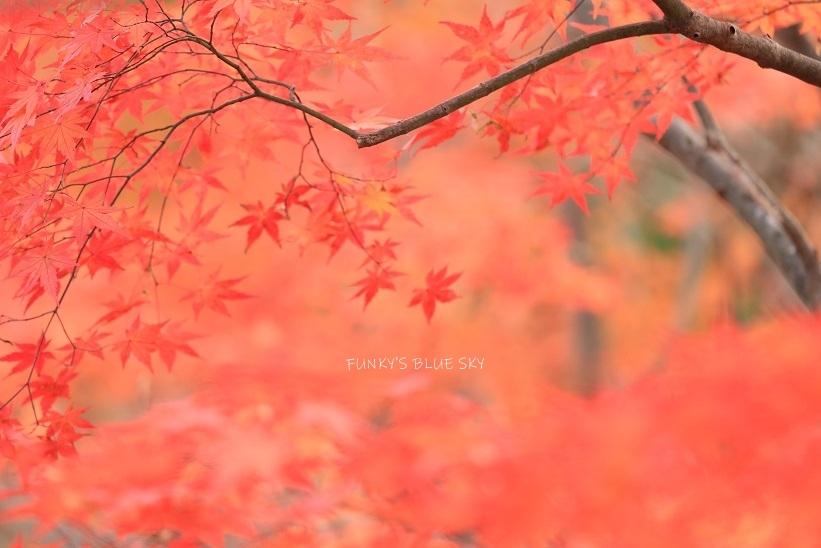 深まりゆく秋の日に、_c0145250_09082227.jpg