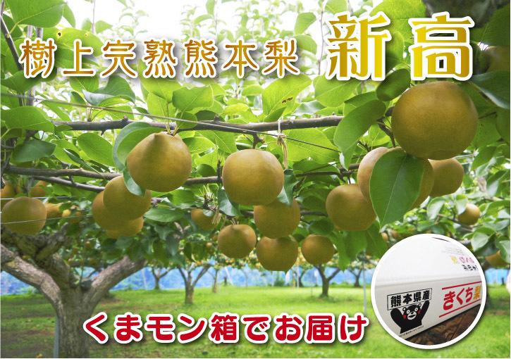 熊本梨 本藤果樹園 令和2年度の梨作りスタート!匠の選定作業が始まりました!(前編)_a0254656_16461491.jpg