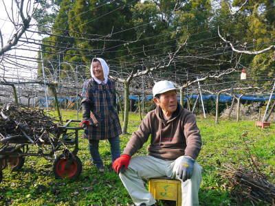 熊本梨 本藤果樹園 令和2年度の梨作りスタート!匠の選定作業が始まりました!(前編)_a0254656_17202857.jpg