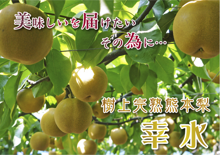 熊本梨 本藤果樹園 令和2年度の梨作りスタート!匠の選定作業が始まりました!(前編)_a0254656_18085109.jpg