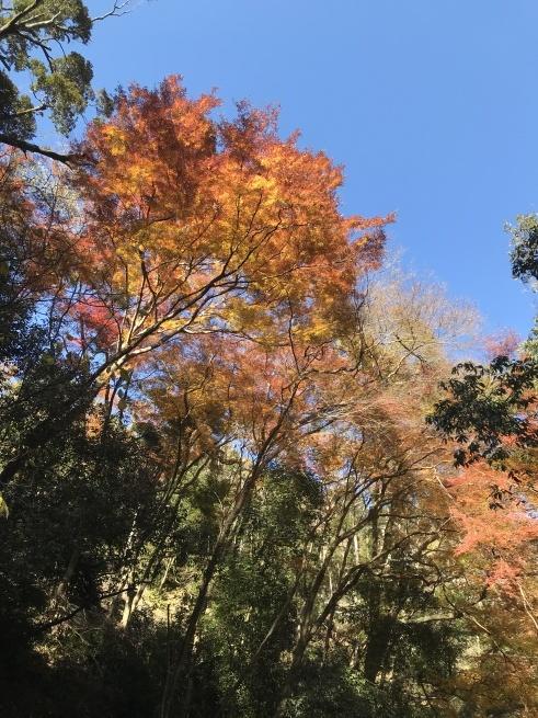 今年の箕面山の紅葉も、ちょっと・・・_c0185356_18165727.jpg