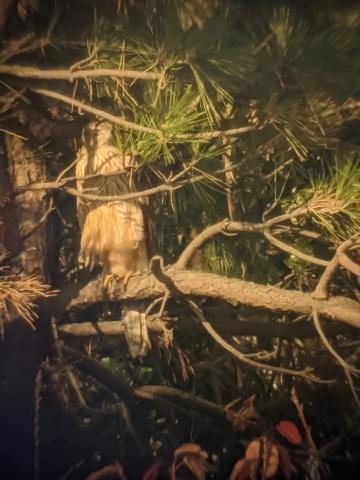 ★オオタカの大活躍? 先週末の鳥類園(2019.12.14~12.15)_e0046474_23024525.jpg