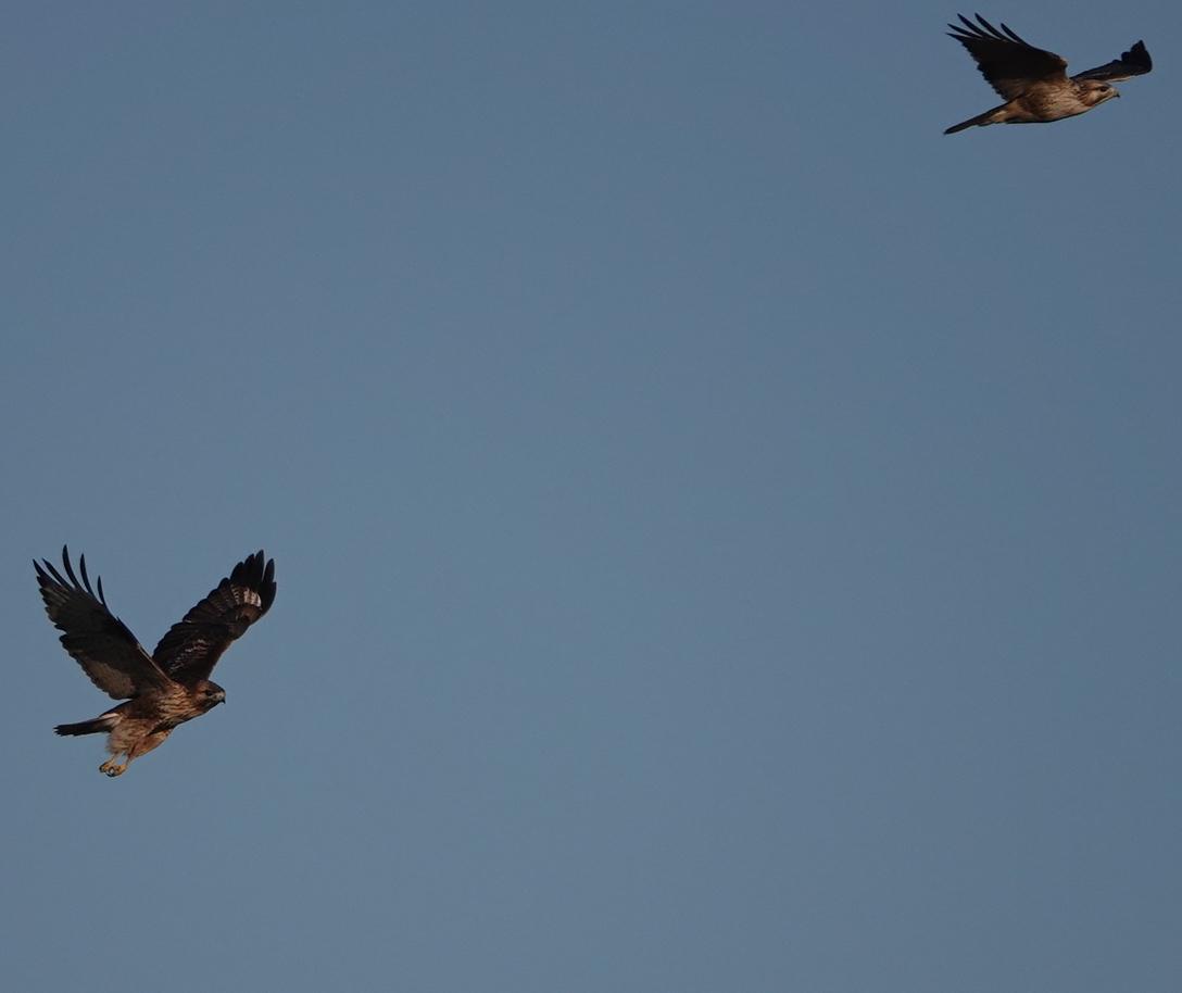 ★オオタカの大活躍? 先週末の鳥類園(2019.12.14~12.15)_e0046474_23031961.jpg