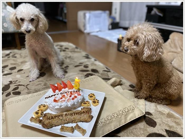 12月16日、今日は大の5歳の誕生日です、改めて、おめでとう~大!!_b0175688_19043267.jpg