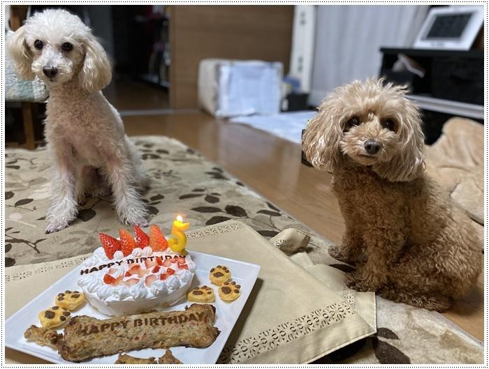 12月16日、今日は大の5歳の誕生日です、改めて、おめでとう~大!!_b0175688_19043596.jpg