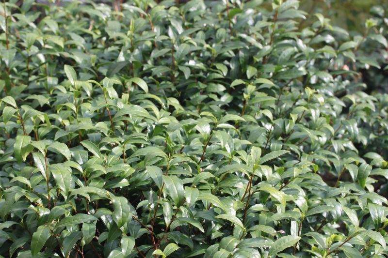 茶LON (71)_b0220318_08005673.jpg