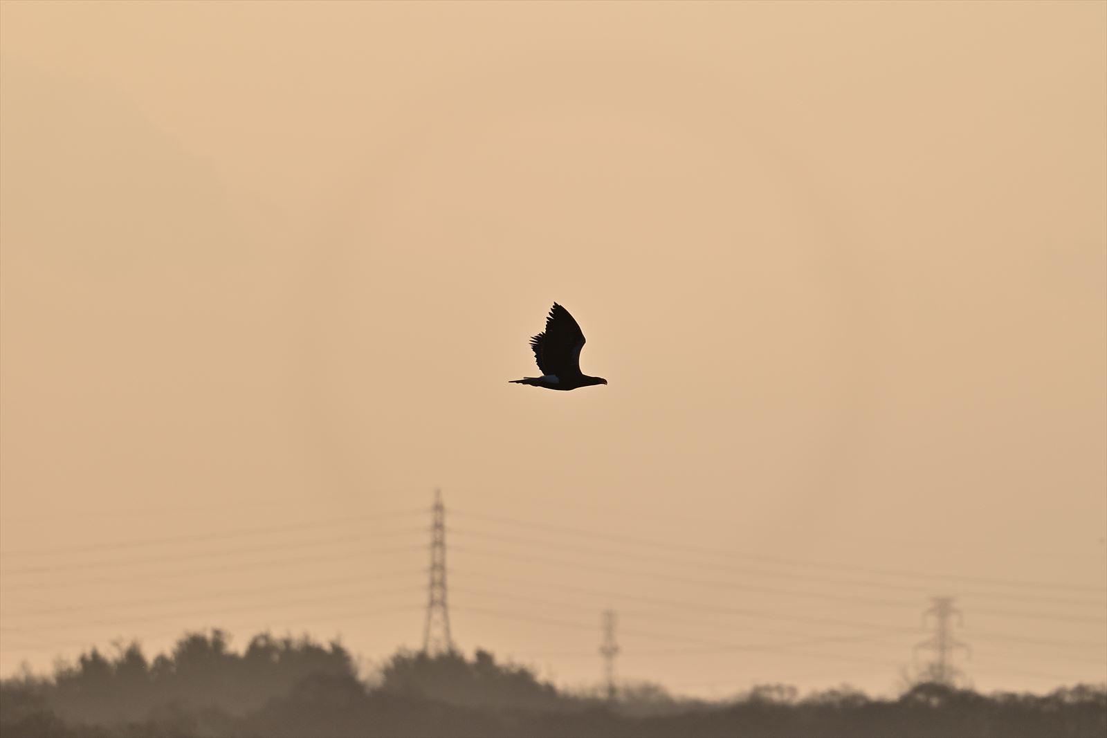 水鳥戻る 今週のウトナイ湖_a0145819_10575780.jpg