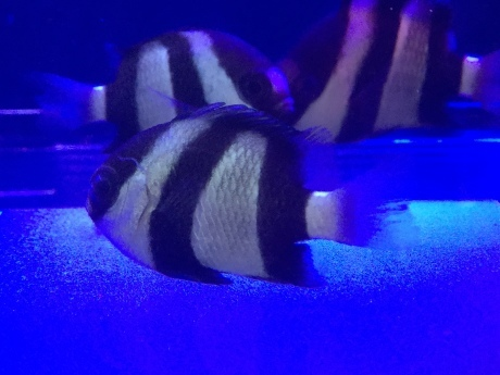 191219 海水魚 熱帯魚 めだか 水草_f0189122_15260302.jpeg