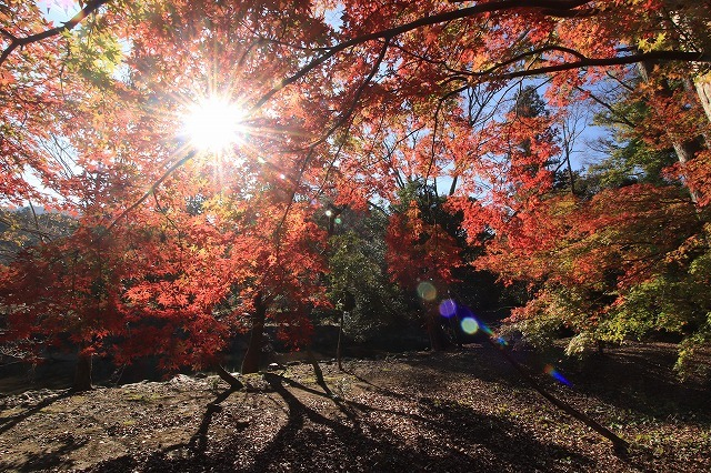 五十鈴川上流の紅葉(その2)(撮影:12月1日)_e0321325_14323985.jpg
