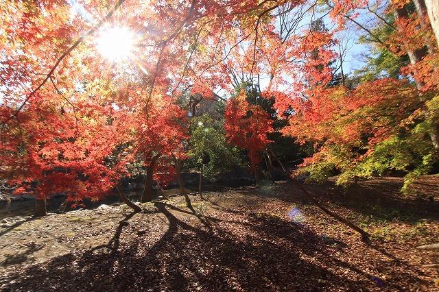五十鈴川上流の紅葉(その2)(撮影:12月1日)_e0321325_14325375.jpg