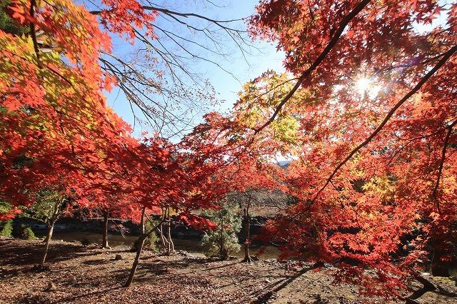 五十鈴川上流の紅葉(その2)(撮影:12月1日)_e0321325_14332081.jpg