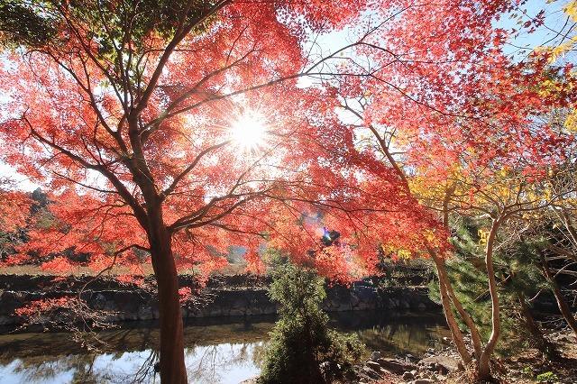 五十鈴川上流の紅葉(その2)(撮影:12月1日)_e0321325_14335195.jpg