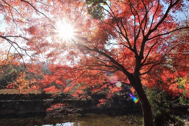 五十鈴川上流の紅葉(その2)(撮影:12月1日)_e0321325_14340476.jpg