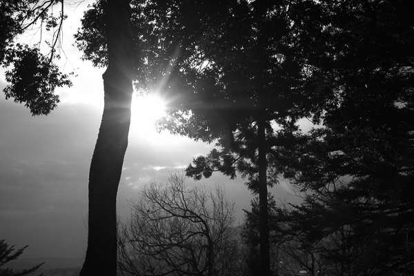 朝の船岡公園_e0344430_18301204.jpg
