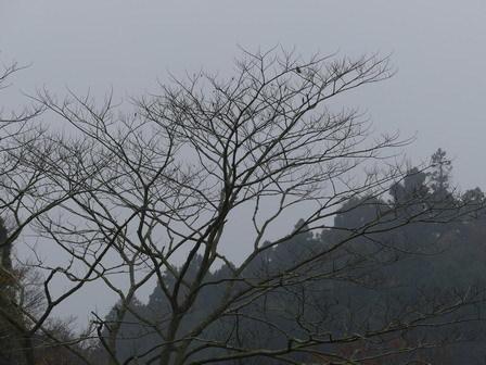 霧の万木堰_a0123836_16584683.jpg