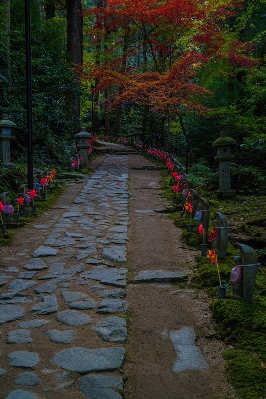 2019滋賀寺社~金剛輪寺_e0363038_10105861.jpg