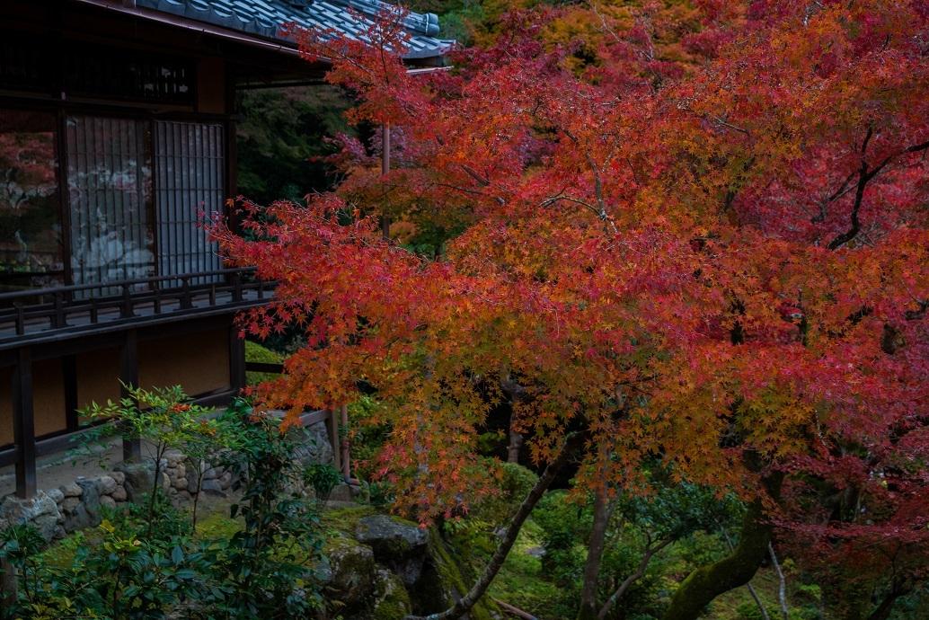 2019京都紅葉~和中庵_e0363038_13483638.jpg